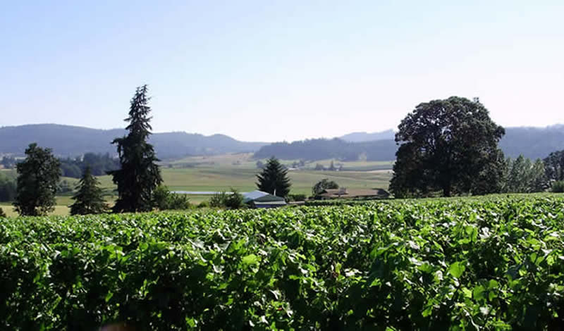 Harlow Hills Vineyard